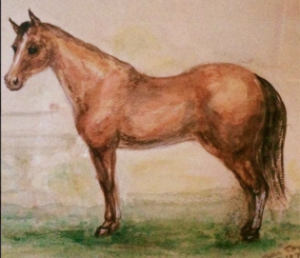 horsecrop copy